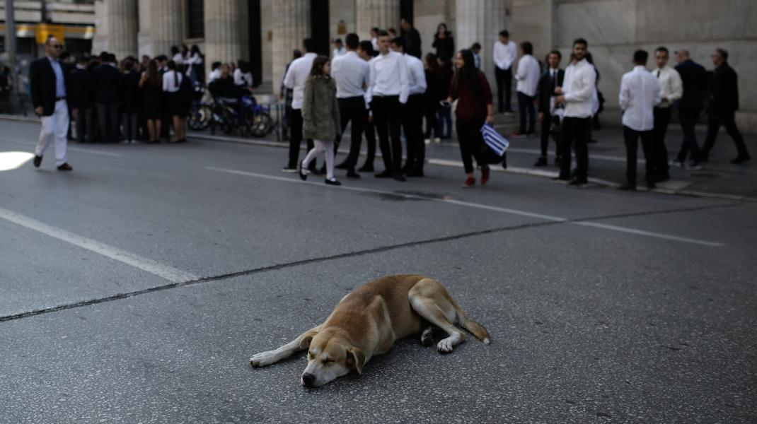 Μαθητική παρέλαση στη Θεσσαλονίκη -Ευκαιρία για χουζούρι για τον σκυλάκο- Φωτογραφία: Konstantinos Tsakalidis / SOOC