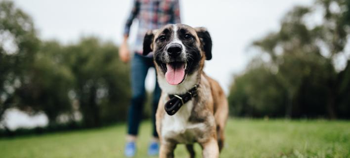Οι σκύλοι... εκτοξεύουν τα ενοίκια στη Σίλικον Βάλεϊ/ Φωτογραφία: shutterstock