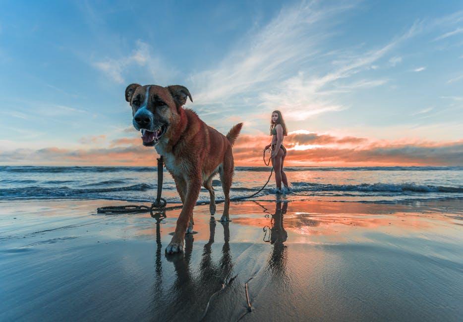 Ο κίνδυνος ο σκύλος μας να καταναλώσει κάτι που δεν πρέπει ελλοχεύει όχι μόνο κατά τη διάρκεια των διακοπών αλλά και στις απλές καθημερινές βόλτες και για αυτό χρειάζεται ιδιαίτερη προσοχή από την πλευρά των ιδιοκτητών.