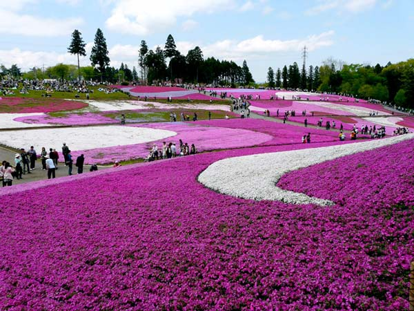 Την άνοιξη στην ιαπωνία [εικόνες