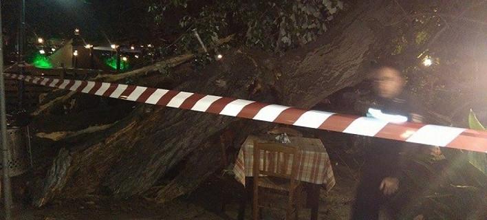 Νέος τρόμος στην Πορταριά: Επεσε πλάτανος, τραυματίστηκε γυναίκα