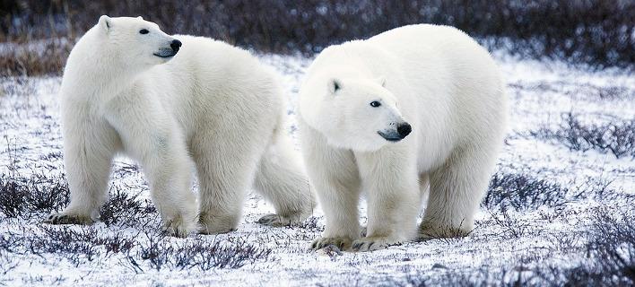 Η Αρκτική αλλάζει δραματικά, φωτογραφία: pixabay