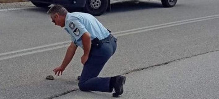 Αστυνομικός βοηθά χελωνάκι/ Φωτογραφία:kozanilife.gr