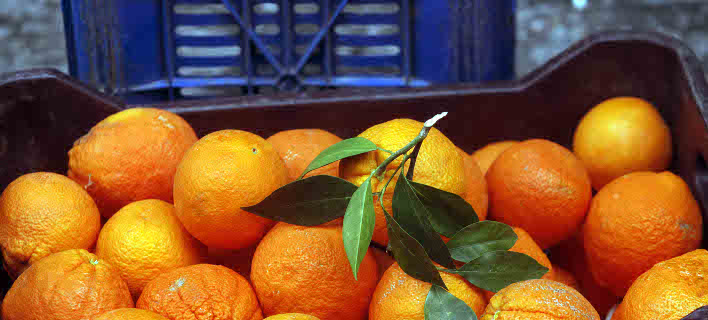 πορτοκάλια/Φωτογραφία: Eurokinissi