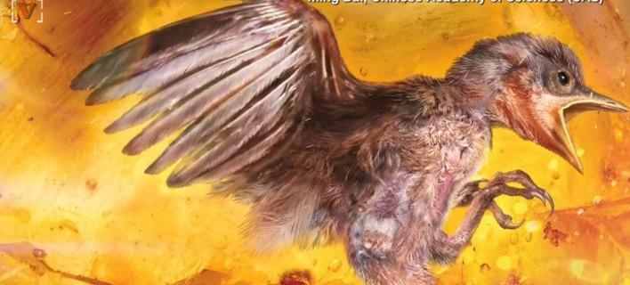 Εκπληκτική ανακάλυψη: Επιστήμονες βρήκαν αυτούσιο πτηνό 99 εκατ. ετών! [εικόνα & βίντεο]