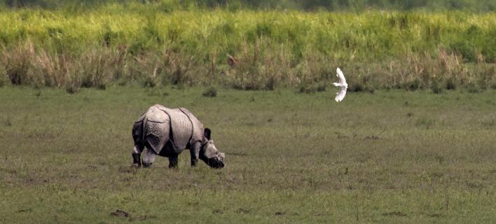 Τέλος στις δημοπρασίες αντικειμένων από κέρατο ρινόκερου λένε οι οίκοι/ Φωτογραφία: AP- Anupam Nath