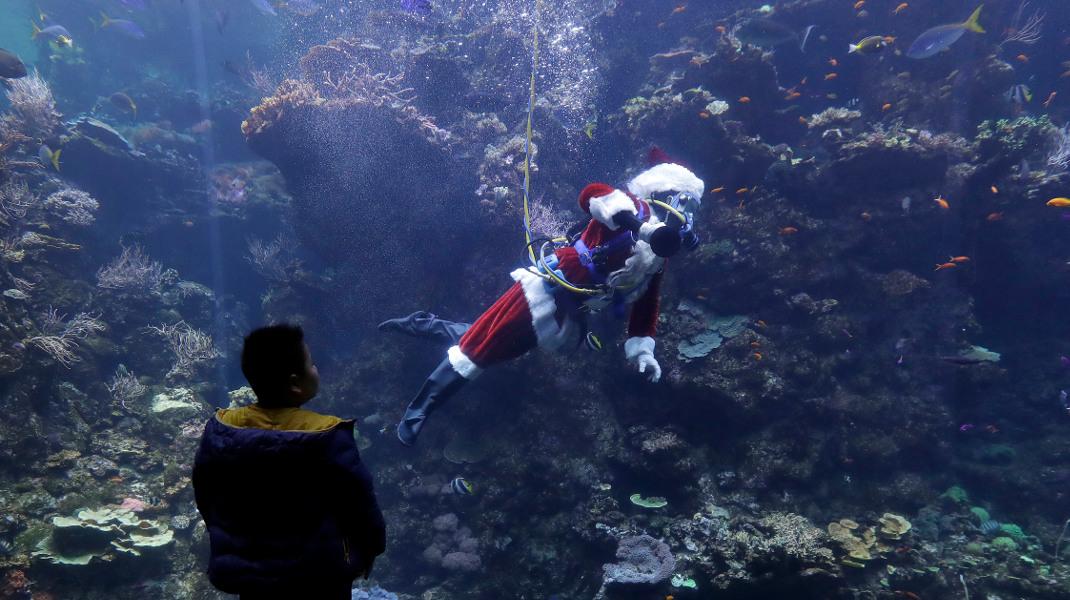 Ο Αϊ-Βασίλης κάνει κατάδυση σε κοραλλιογενή ύφαλο -Φωτογραφία: AP Photo/Jeff Chiu