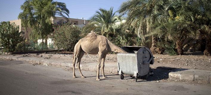 Περιοχή «φάντασμα» το Σαρμ Ελ Σέιχ: Μόνο καμήλες και λιγοστοί ντόπιοι κυκλοφορούν στους δρόμους [εικόνες]