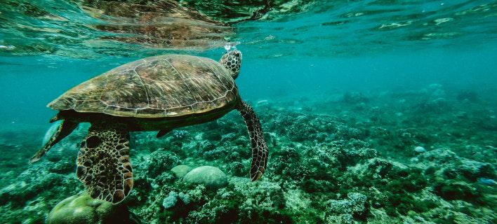 Νεκρές βρέθηκαν 122 θαλάσσιες χελώνες στο Μεξικό. Φωτογραφία: Pexels