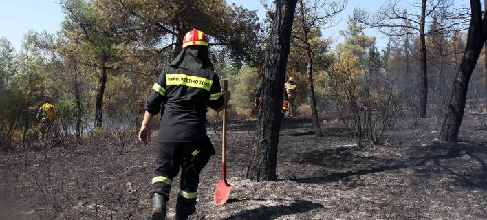 Προσαγωγή υπόπτου που επιχείρησε να βάλει τρεις φορές φωτιά στο Σέιχ Σου (Φωτογραφία: ΜΟΤΙΟΝΤΕΑΜ/ΦΑΝΗ ΤΡΥΨΑΝΗ)