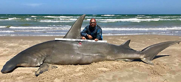 O τυχερός ψαράς Πόκο Σεντίλο ποζάρει περήφανος με τον καρχαρία που έπιασε (Φωτογραφία: Facebook/South Texas Fishing Association)