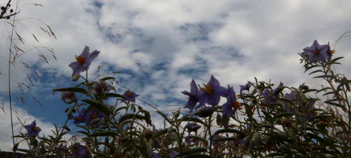 Συννεφιά χωρίς βροχές -Σε υψηλό επίπεδο η θερμοκρασία