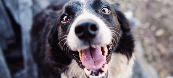 15 μήνες φυλακή και 6.000 πρόστιμο σε 42χρονο που έδεσε τον σκύλο του σε δέντρο και τον άφησε να πεθάνει /Φωτογραφία: Pexels