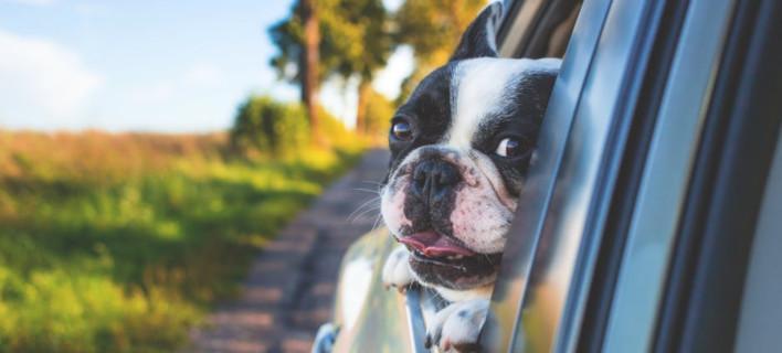 Οδηγός ταξιδιού για σκύλους και γάτες /Φωτογραφία: Pexels