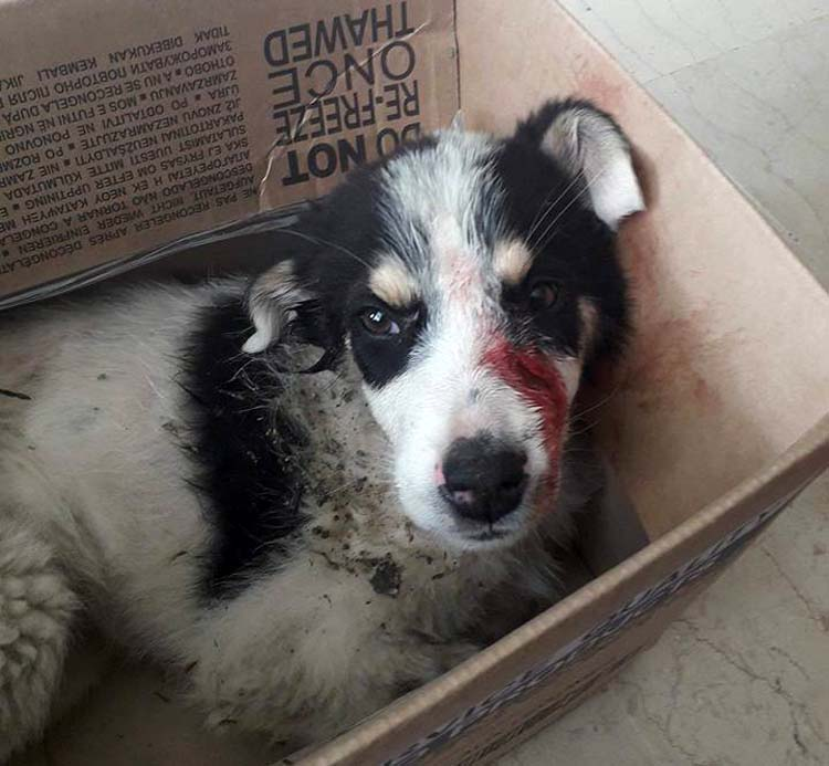 30.000 ευρώ πρόστιμο σε άνδρα που χτύπησε με λοστό σκύλο στην Λάρισα[photos]