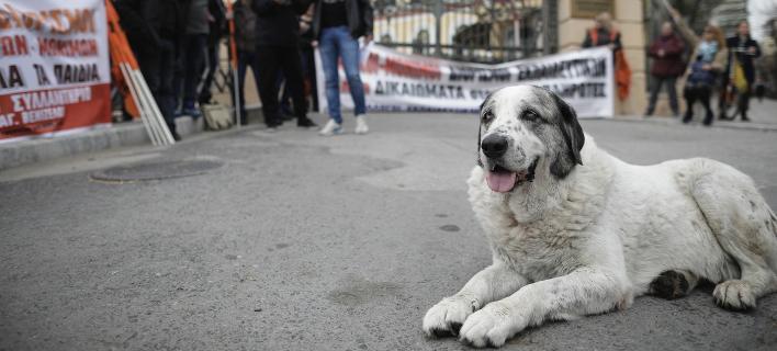 Αδέσποτος σκύλος/ Φωτογραφία: SOOC