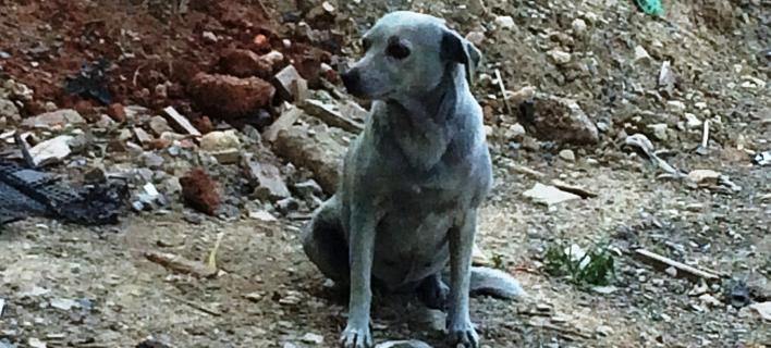 Ασυνείδητοι έβαψαν με μπλε μπογιά σκυλίτσα στην Κρήτη (Φωτογραφία: Facebook)