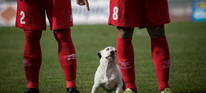 Ο ξεχωριστός «φίλαθλος» που εισέβαλε στο γήπεδο των Τρικάλων (Φωτογραφία: EUROKINISSI/ΘΑΝΑΣΗΣ ΚΑΛΛΙΑΡΑΣ)