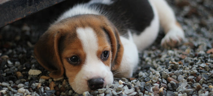 σκυλάκι/Φωτογραφία: pexels