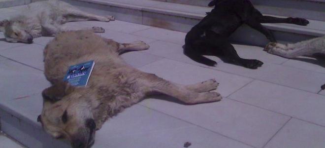 Σοκαρισμένοι οι κάτοικοι του Κιλκίς-Φρικτό θάνατο βρήκαν σκύλοι και γάτες από φό