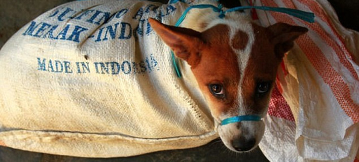 Φωτογραφία: Dog Meat Free Indonesia