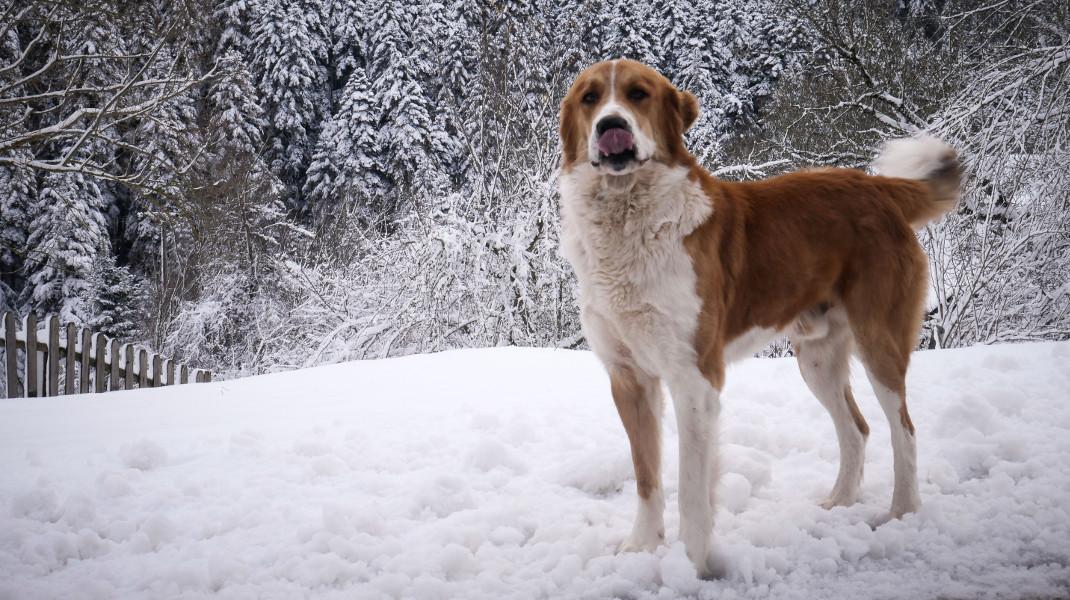 Η καλύτερή του με τα χιόνια στο Περτούλι -Φωτογραφία: Eurokinissi-ΝΙΚΟΛΟΠΟΥΛΟΣ ΑΝΤΩΝΗΣ