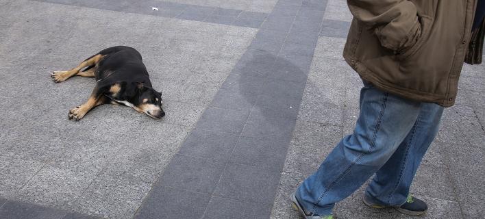 Δίωξη σε δήμαρχο για φόλες σε αδέσποτα (Φωτογραφία αρχείου: SOOC/ George Vitsaras)