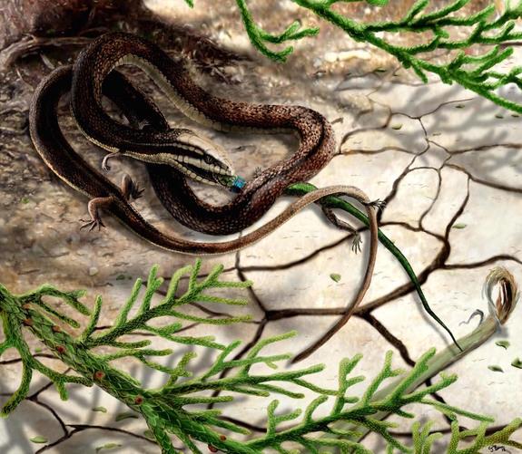 Ανακαλύφθηκε το πρώτο φίδι με τέσσερα πόδια!![Photos]