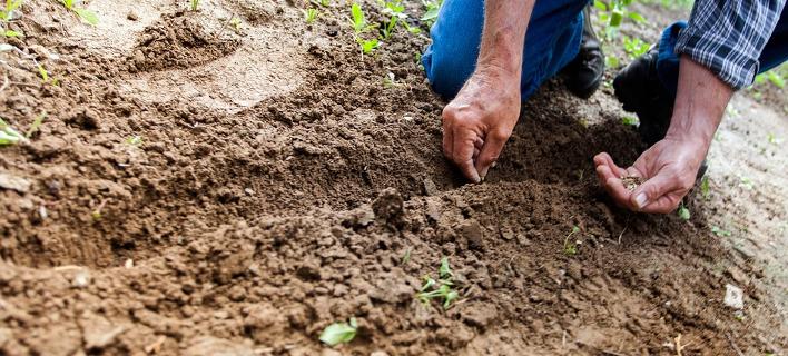 Παγκόσμια Ημέρα εδάφους, φωτογραφία: pixabay