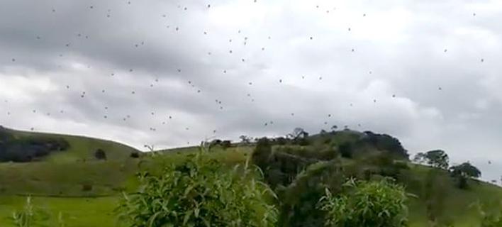 Κάτοικοι είδαν εκατοντάδες αράχνες να αιωρούνται πάνω από τα κεφάλια τους