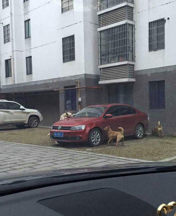 Σκύλος οδηγός