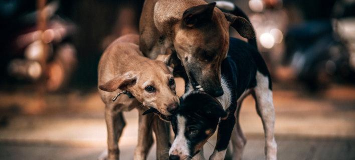 Αδέσποτοι σκύλοι (Φωτογραφία: Unsplash)