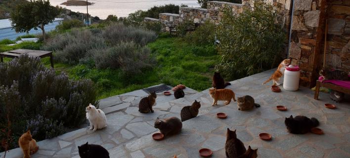 Γάτες στη Σύρο (Φωτογραφία: Facebook)