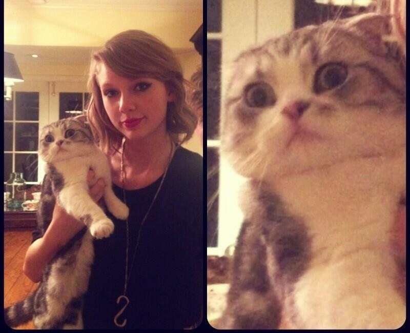 Taylor Swift Cat Name Cute Cat 2018