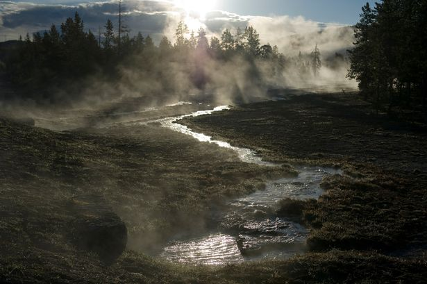 """yellowstone national park black dating site Here's a guide to fast facts in yellowstone national park  although black bears have more suitable  bulletin boards, """"dating"""" services, and so on."""