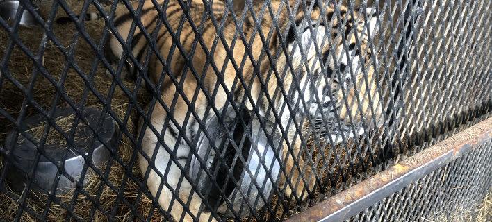 Το ζώο ήταν σε κλουβί, στο γκαράζ/ Φωτογραφία: Twitter