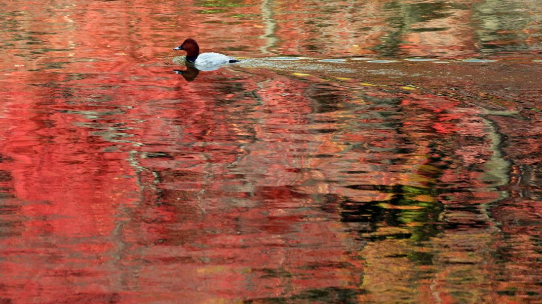 Φθινόπωρο στο Τόκιο -Φωτογραφία: AP Photo/Koji Sasahara