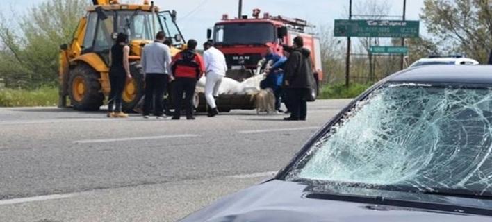 Απίστευτο τροχαίο στην Ε.Ο Ξάνθης-Κομοτηνής -Δύο αυτοκίνητα συγκρούστηκαν με... άλογο [εικόνα & βίντεο]