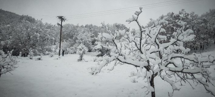 χιόνι στο νομό Τρικάλων/Φωτογραφία αρχείου: Eurokinissi