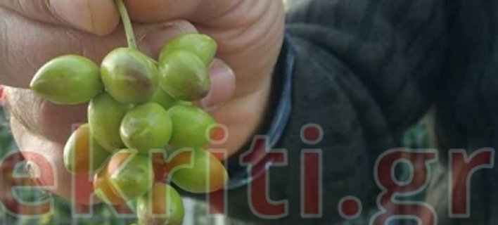 ΦΩΤΟΓΡΑΦΙΑ: ekriti.gr