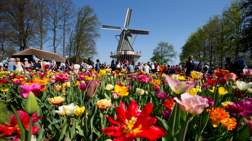 Ανοιξη «πνιγμένη» από τουλίπες στην Ολλανδία -Φωτογραφία: AP Photo/Peter Dejong