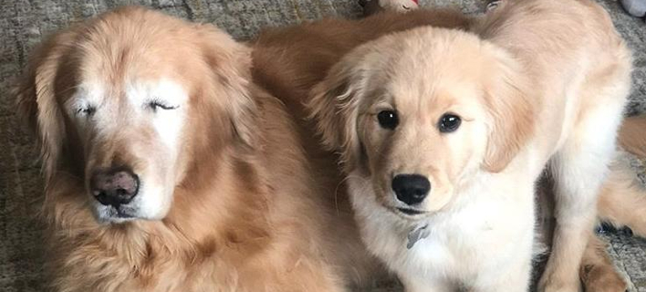 Τυφλός σκύλος με τον σκύλο-οδηγό του (Φωτογραφία: Instagram)