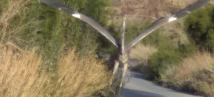 Μυστήριο με πουλί αλά Τζουράσικ Παρκ στην Ιεράπετρα -Φωτογραφίες... τρόμος
