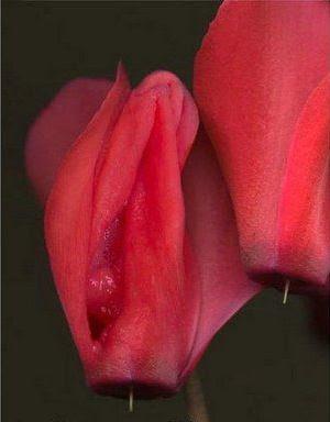 Όταν η φύση «οργιάζει»: φυτά σε σχήμα γεννητικών οργάνων που σε κάνουν να κοκκινίζεις! [εικόνες]