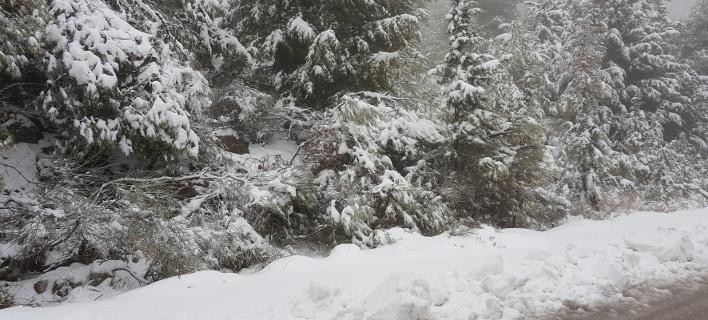 Τραγωδία σε χωριό στο Αίγιο -Βρήκαν νεκρή 80χρονη, θαμμένη στο χιόνι /Φωτογραφία Αρχείου: Intime News