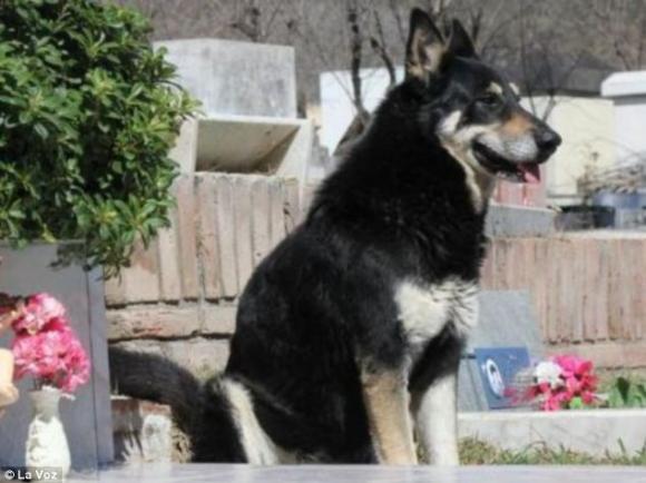Ούτε άνθρωπος! Σκύλος ζει εξι χρόνια στον τάφο του αφεντικού του...