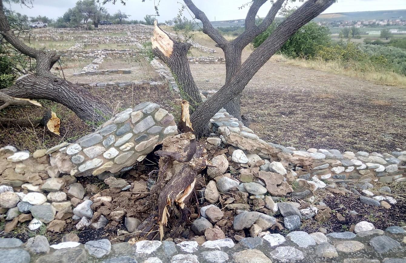 ξεριζωμένο δέντρο από την κακοκαιρία στη Χαλκιδική