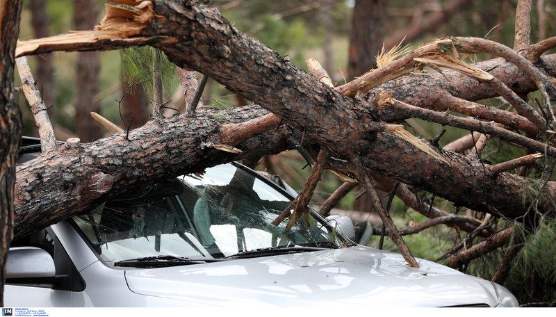 Σπασμένα δέντρα κατέστρεψαν αυτοκίνητα.