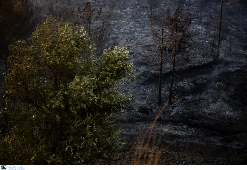 Καμμένα στο δάσος στην Εύβοια