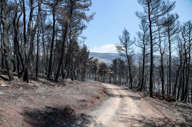 Δρόμος στο καμένο δάσος της Εύβοιας
